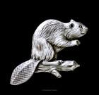 Beaver Lapel Pin